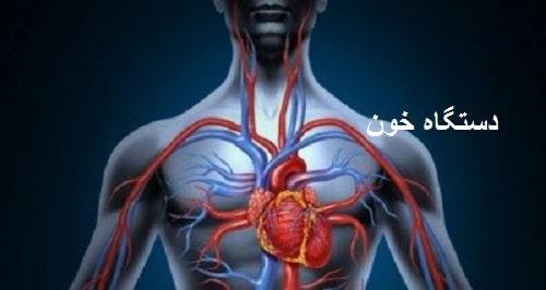دانلود جزوه کامل دستگاه گردش خون pdf آناتومی و فیزیولوژی دستگاه گردش خون