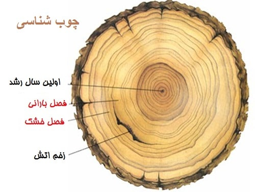 دانلود جزوه کامل چوب شناسی و مدیریت حفاظت چوب pdf
