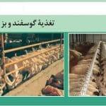 تغذیه گوسفند و بز