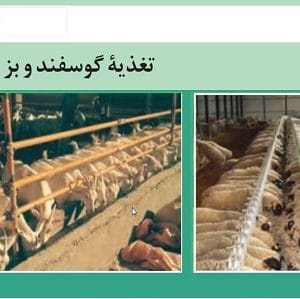 دانلود جزوه تغذیه گوسفند و بز در قالب فایل پاورپوینت ppt