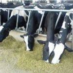 دانلود مدیریت تغذیه گاو های شیری