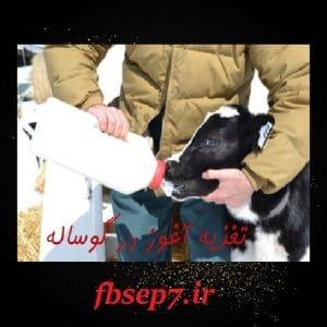 دانلود مقاله مدیریت تغذیه آغوز در گوساله های شیر خوار