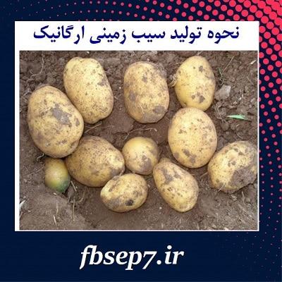 دانلود مقاله تولید سیب زمینی ارگانیک word
