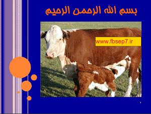 بررسی تاثیر مصرف پروپیلن گلیکول بر بیماری کتوز در گاوهای شیری