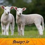 دانلود مقاله بیماری های انسان و گوسفند