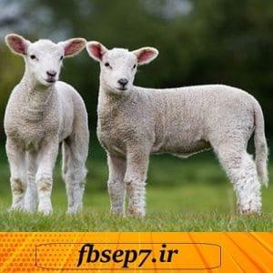 دانلود مقاله بیماریهای مشترک بین انسان و گوسفند (Zoonoses) در قالب پاورپوینت ppt